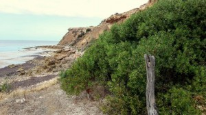 South from Port Vincent, Walk the Yorke Trail (4)