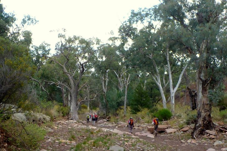 Access to off-track walking may be under threat in the Flinders Ranges and beyond  – Pastoral Act Review