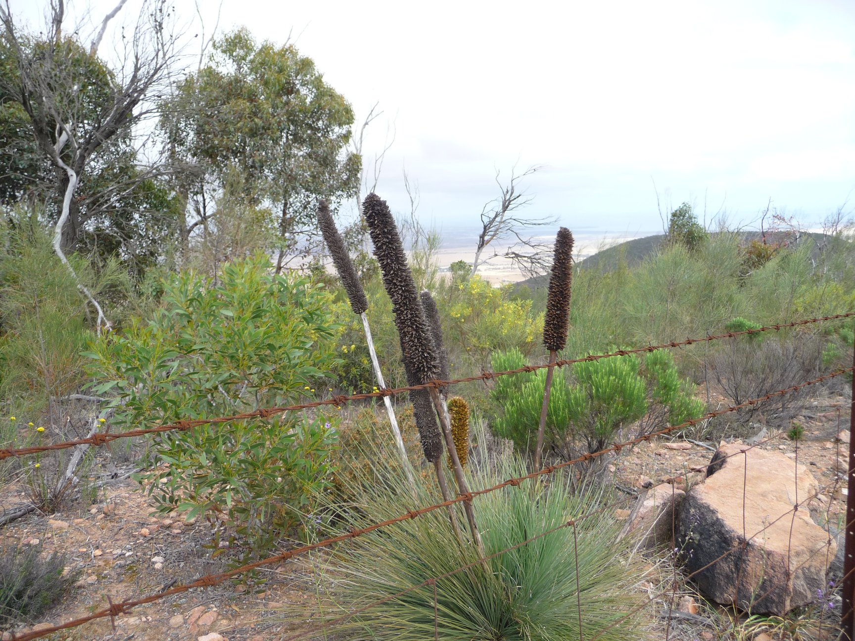 Heysen Trail Closure – Southern Flinders Ranges