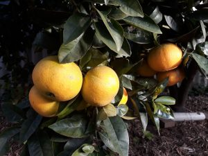 Keep fruit fly free on your walks !!